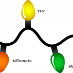 christmas_lights_proteins
