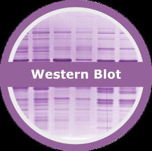 logo_western_small (300x300) - New