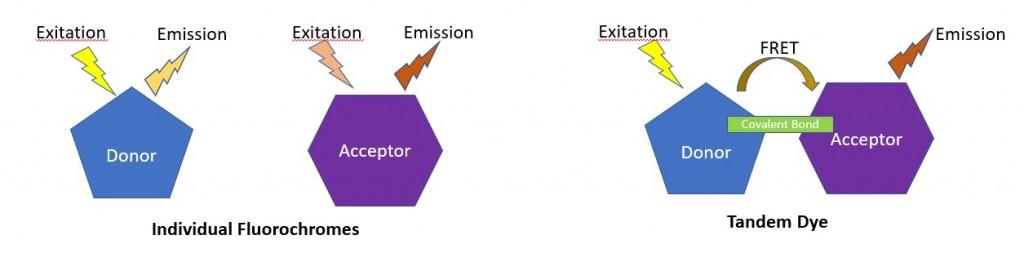 FRET Diagram