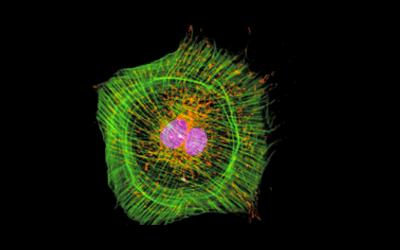 Newsletter: Understanding Fluorochromes for Flow Cytometry